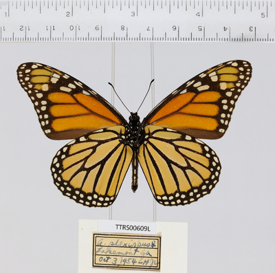 Morphbank biodiversity NSF FSU Florida State University Tall Timbers whole organism/Ventral/Digital Camera///Female/ Digital Camera Unspecified whole organism Ventral Female Unspecified  Unspecified       Tall Timbers Research Station Animalia Arthropoda Hexapoda Insecta Pterygota Neoptera Lepidopterabutterflies moths papillons papillons de nuit Borboleta Mariposa