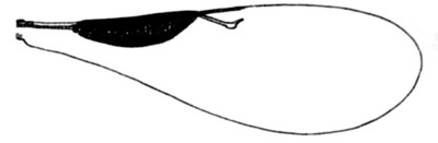 Morphbank biodiversity NSF FSU Florida State University ChalcidToL  Unknown Unknown Forewings Dorsal Unknown Unknown  Unknown UNKNOWN  UNKNOWN   Not provided University of California, Riverside Animalia Arthropoda Hexapoda Insecta Pterygota Neoptera Hymenoptera Apocrita Terebrantes Chalcidoidea Tetracampidae Platynocheilinae Platynocheilus Platynocheilus sp.